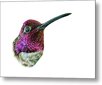 Anna's Hummingbird Metal Print by Logan Parsons
