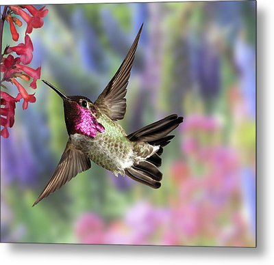 Annas Pastel Background Metal Print