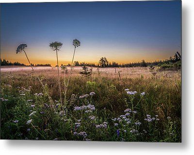 Anne's Lace On Misty Cavendish Meadows Metal Print