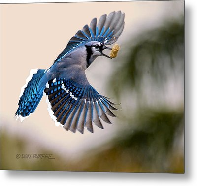 Metal Print featuring the photograph Another Peanut by Don Durfee
