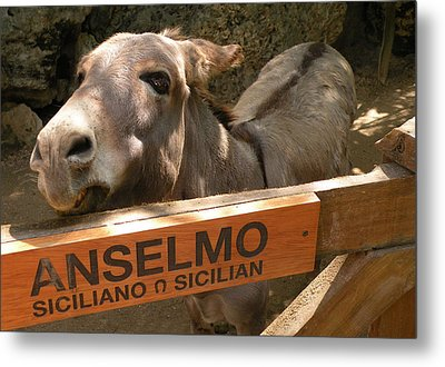 Anselmo Metal Print by Dianne Levy