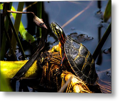 Ant Meets Turtle Metal Print by Bob Orsillo