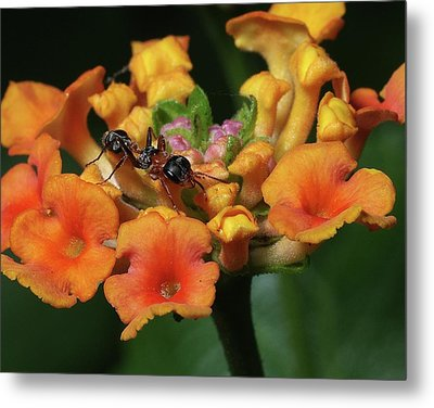 Ant On Plant  Metal Print by Richard Rizzo