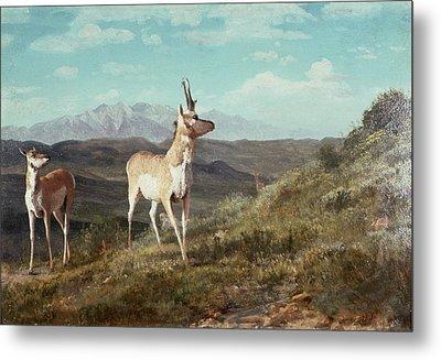 Antelope Metal Print by Albert Bierstadt