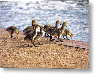 Anticapation  Metal Print by Tammy Espino