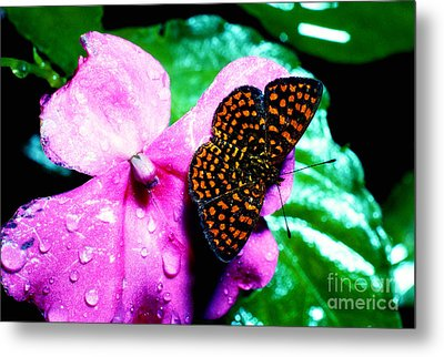 Antillean Crescent Butterfly On Impatiens Metal Print by Thomas R Fletcher
