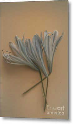 Antique Floral Art Metal Print