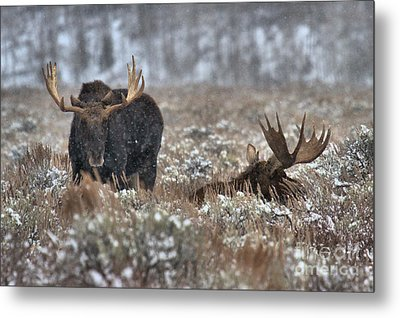 Metal Print featuring the photograph Antlers In The Brush by Adam Jewell