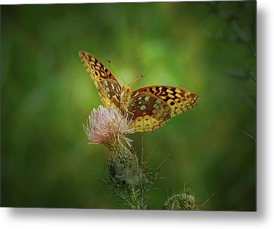 Metal Print featuring the photograph Aphrodite Fritillary Butterfly by Sandy Keeton