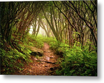 Appalachian Hiking Trail - Blue Ridge Mountains Forest Fog Nature Landscape Metal Print by Dave Allen