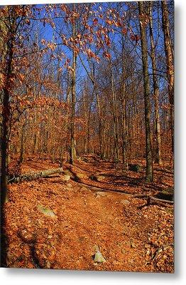 Appalachian Trail In Maryland 4 Metal Print by Raymond Salani III