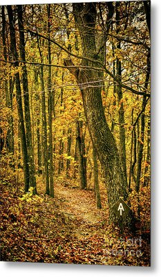 Metal Print featuring the photograph Appalachian Trail In The Blue Ridge In Autumn by Dan Carmichael