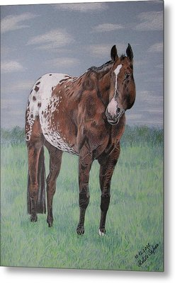 Appaloosa Metal Print by Melita Safran