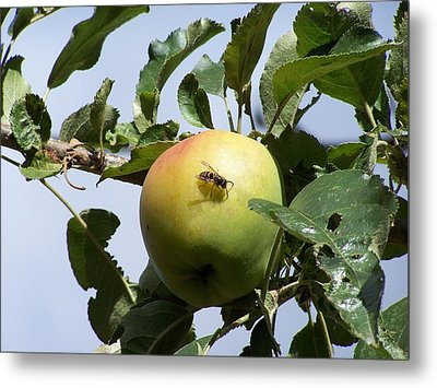 Apple Bee Metal Print by Gene Ritchhart