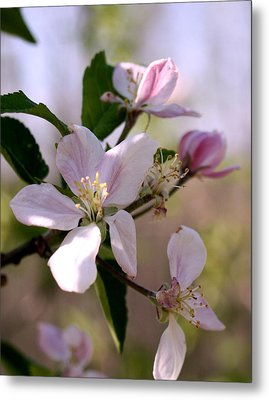 Metal Print featuring the photograph Apple Blossom Time by Diane Merkle