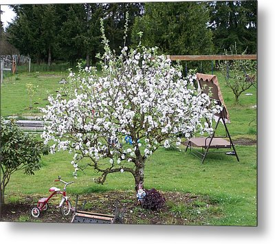 Apple Blossoms Metal Print by Laurie Kidd