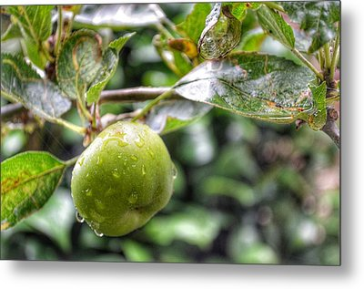Metal Print featuring the photograph Apple In Rain by Isabella F Abbie Shores FRSA
