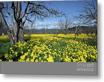 Metal Print featuring the photograph Apple Orchard In January by Stan and Anne Foster