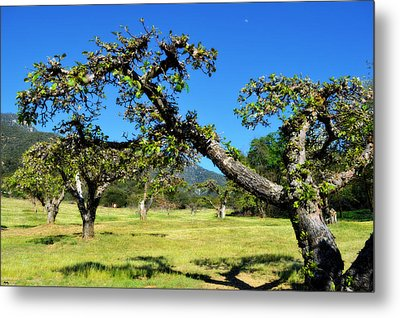 Apple Orchards Of Oak Glen Metal Print