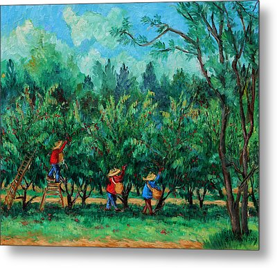 Apple Pickers  Littletree Orchard  Ithaca Ny Metal Print by Ethel Vrana