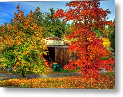 Apple Shed Metal Print by Randy Wehner Photography