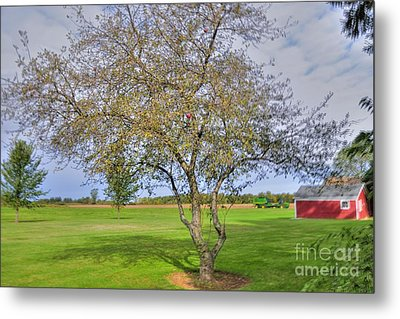 Apple Tree Metal Print by Kathleen Struckle