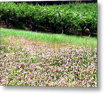 Apple Trees And Clover Metal Print by Will Borden