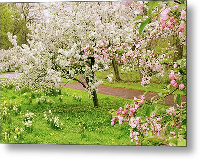Apple Trees In Bloom Metal Print by Jessica Jenney