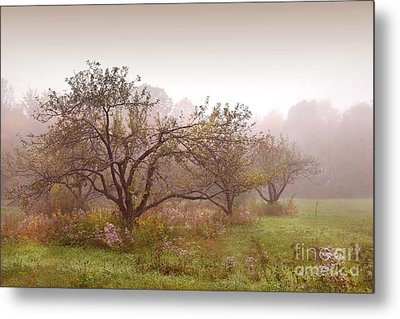 Apples Trees In The Mist Metal Print by Sandra Cunningham