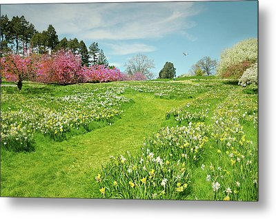 Metal Print featuring the photograph April Days by Diana Angstadt