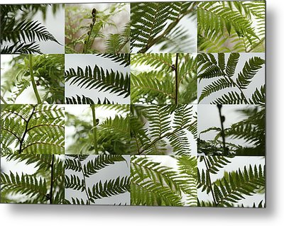 April Ferns 2 Metal Print