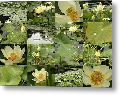 April Lotus Pond Metal Print