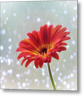 Metal Print featuring the photograph April Showers Gerbera Daisy Square by Terry DeLuco