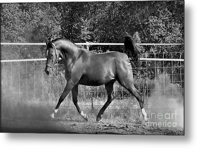Arab At Play Bw Metal Print
