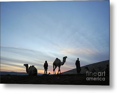 Arabian Camel At Sunset Metal Print by PhotoStock-Israel