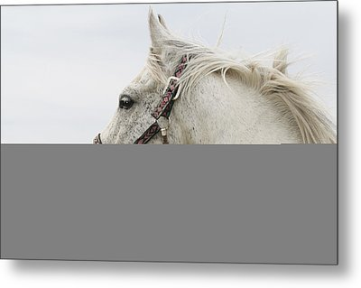 Arabian Horse Portrait Metal Print by Laurie With