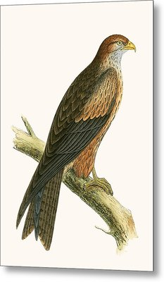 Arabian Kite Metal Print