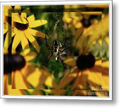 Metal Print featuring the photograph Arachnid Beauty by Deborah Johnson