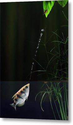Archerfish Metal Print