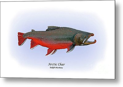 Arctic Charr Metal Print by Ralph Martens