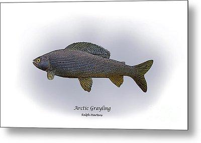 Arctic Grayling Metal Print by Ralph Martens
