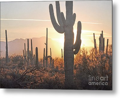 Arizona Saguaro Cactus Sunset Desert Landscape Metal Print by Andrea Hazel Ihlefeld