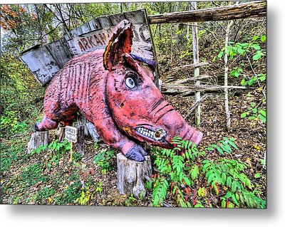 Arkansas Razorbacks Metal Print by JC Findley