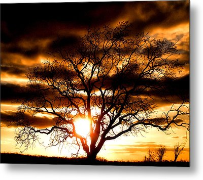 Arms Wide Open Metal Print by Karen M Scovill