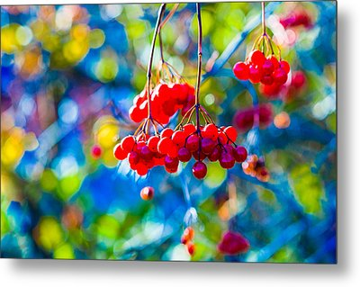 Metal Print featuring the photograph Arrowwood Berries Abstract by Alexander Senin