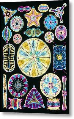 Art Of Diatom Algae (from Ernst Haeckel) Metal Print by Mehau Kulyk