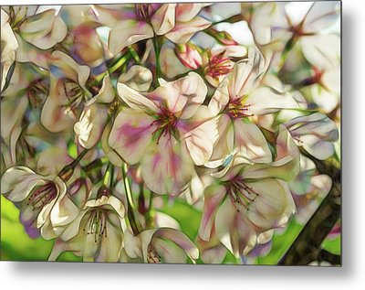 Artistic Rendering Bradford Pear Tree Blooms Ellington Agricultural Center Metal Print by Photo Captures by Jeffery