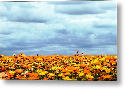 As Far As The Eye Can See Metal Print by Rebecca Cozart