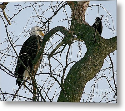 As The Eagle Looks On Metal Print by Sue Stefanowicz
