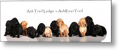 Ash Trail Lodge Pups Metal Print by Pam Gabriel